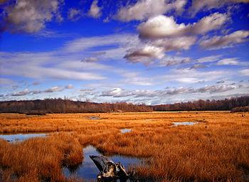 350px-GboroSP_Wetland